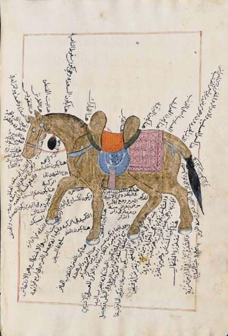 Anatomy of the Horse in the 15th Century | Muslim Heritage